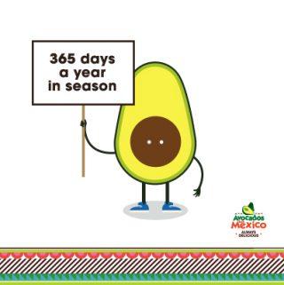 Avocados Always In Season